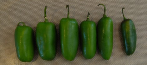 The Fickle Jalapeno